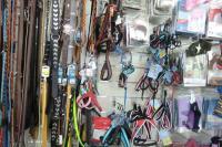 accessori per animali Terni