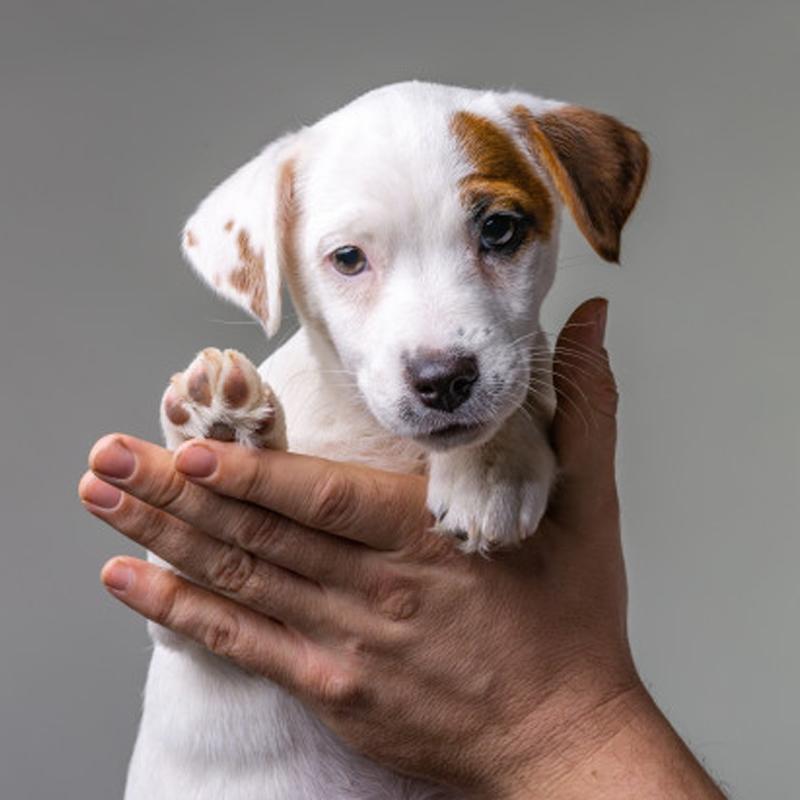 visite veterinarie a domicilio grosseto
