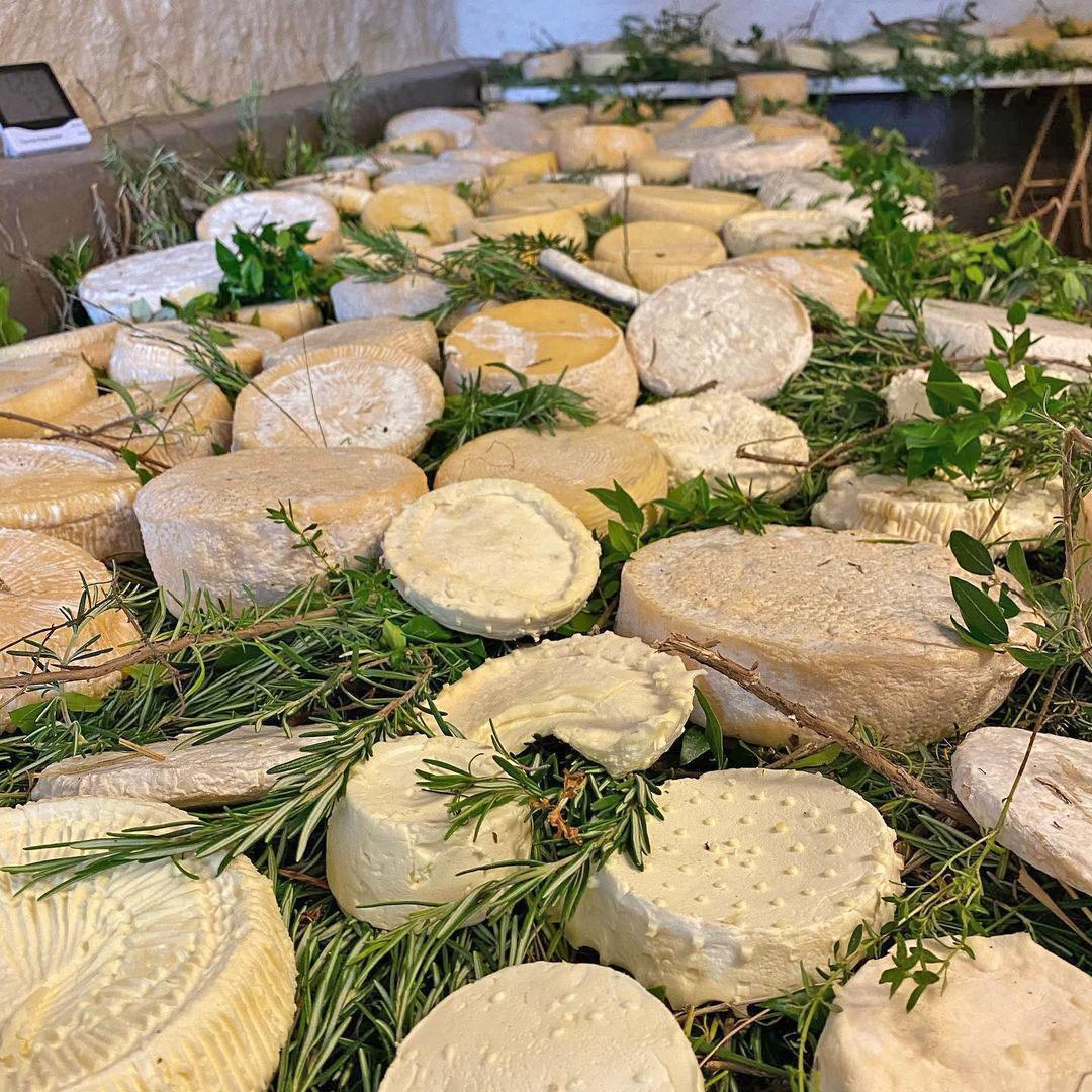 produzione formaggi tipici sardi gallura