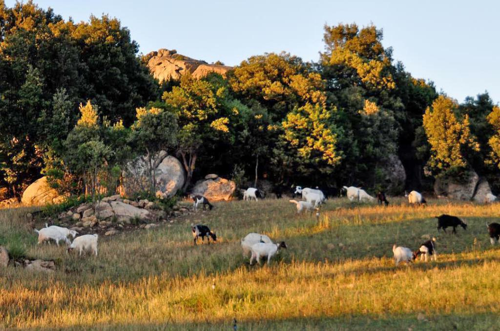 agriturismo con allevamento bestiame gallura