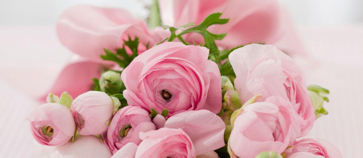 fiori e piante cassibile siracusa