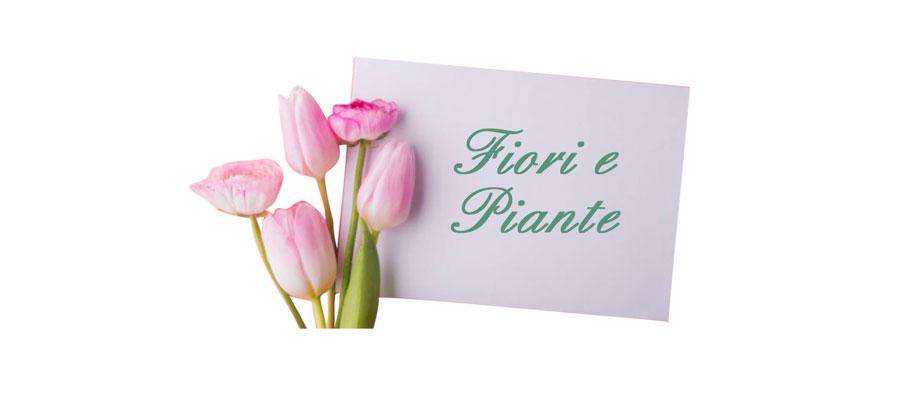 fiori piante eden fiori cassibile siracusa