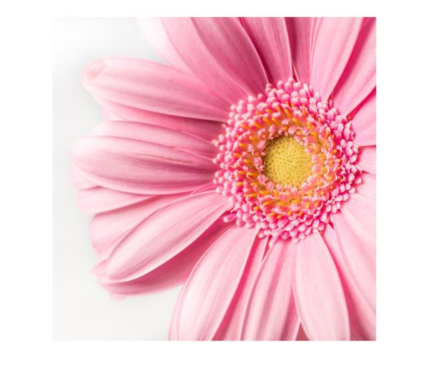 vendita fiori eden fiori cassibile siracusa