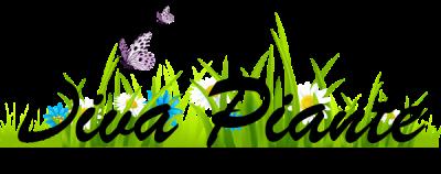 Logo Diva Piante Cagliari