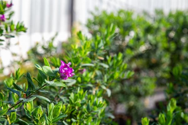 pianta da vaso
