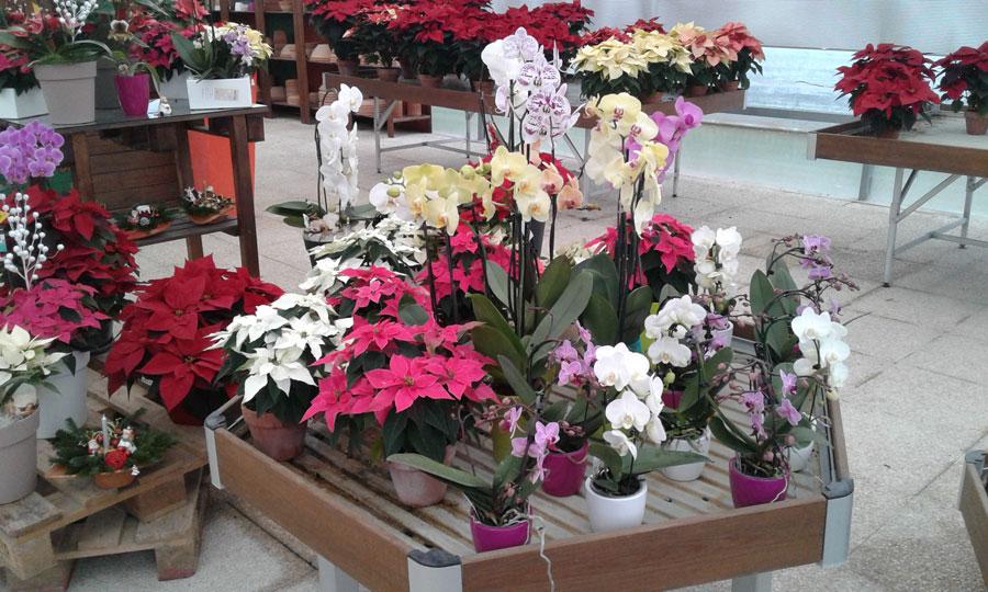 Fiori e piante ancona