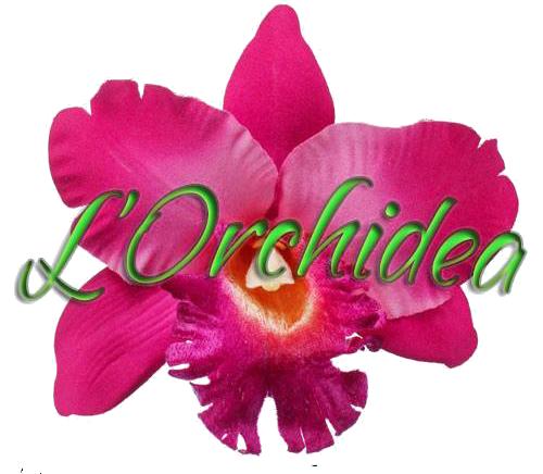 www.fioriepianteorchidea.com