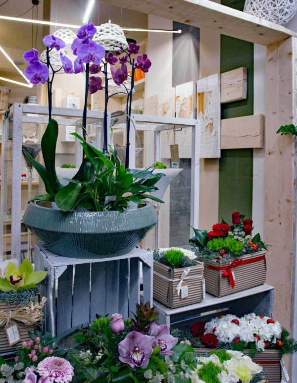 Vendita piante moncalieri torino