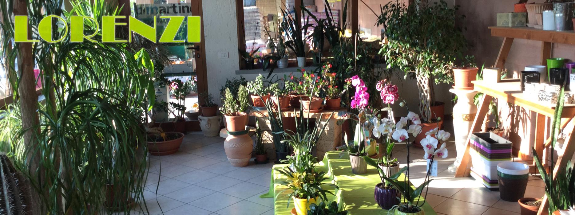 Vendita diretta piante da giardino comun nuovo bergamo