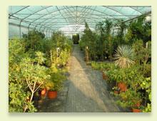 piante da interno ed esterno