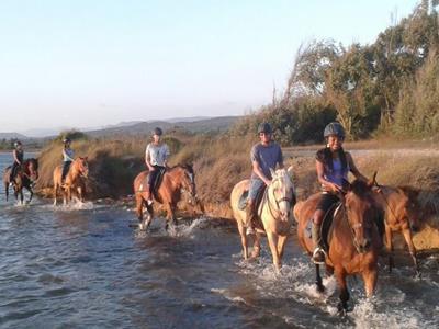 Cavallo Sulcis