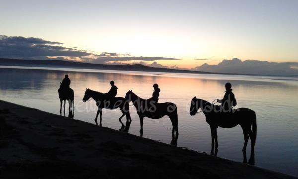 Cavalli sul mare