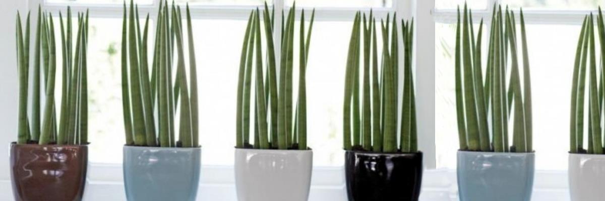 piante da interno ed esterno fiori recisi piante da giardino porcia pordenone