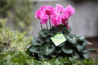 fiori  Porcia Pordenone