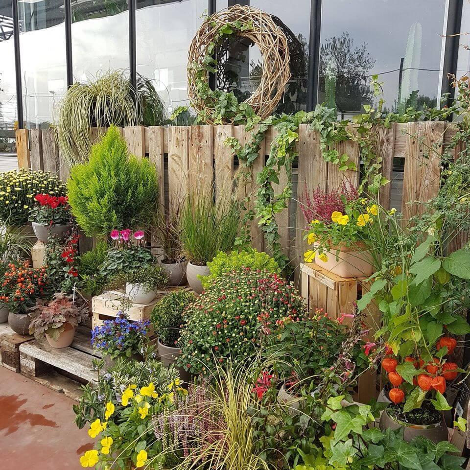 produzione diretta piante e fiori pordenone porcia