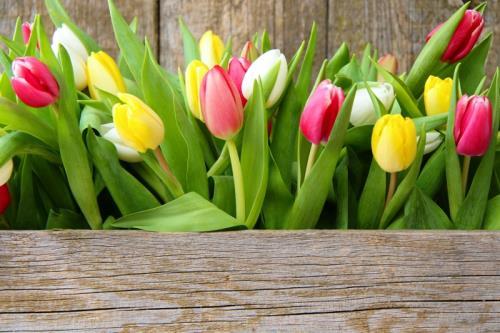 fiori recisi pordenone porcia