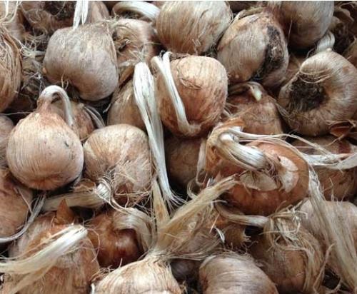 bulbi e sementi pordenone porcia