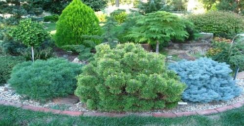 piante da esterno porcia