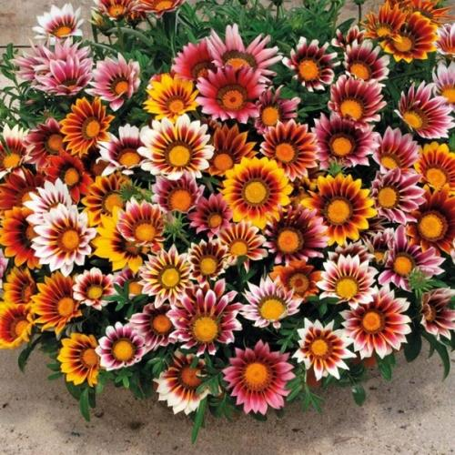 fiori artificiali pordenone porcia piante stagionali