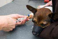 visite veterinarie Cremona