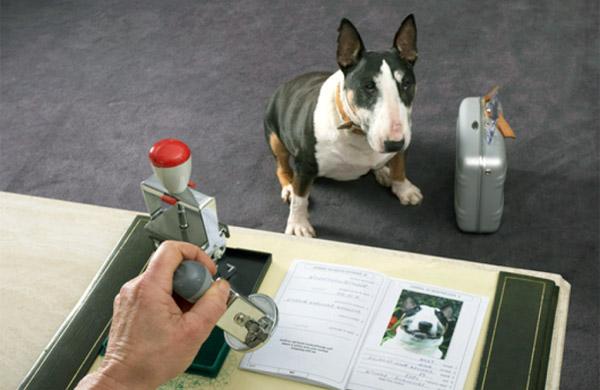 rilascio passaporto animali Cremona