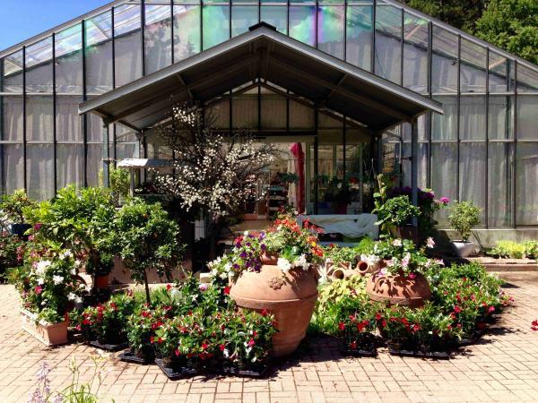vivaio vendita piante
