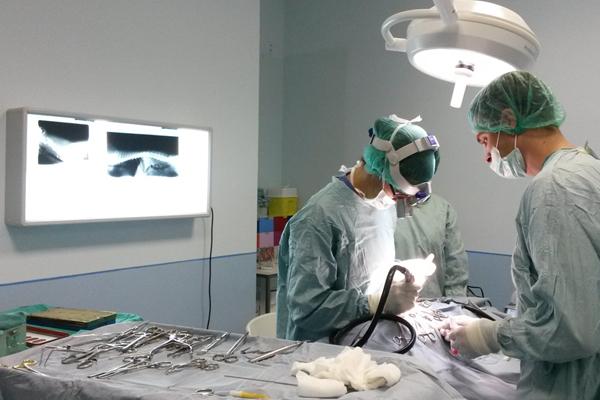 Chirurgia veterinaria Cambiano Torino