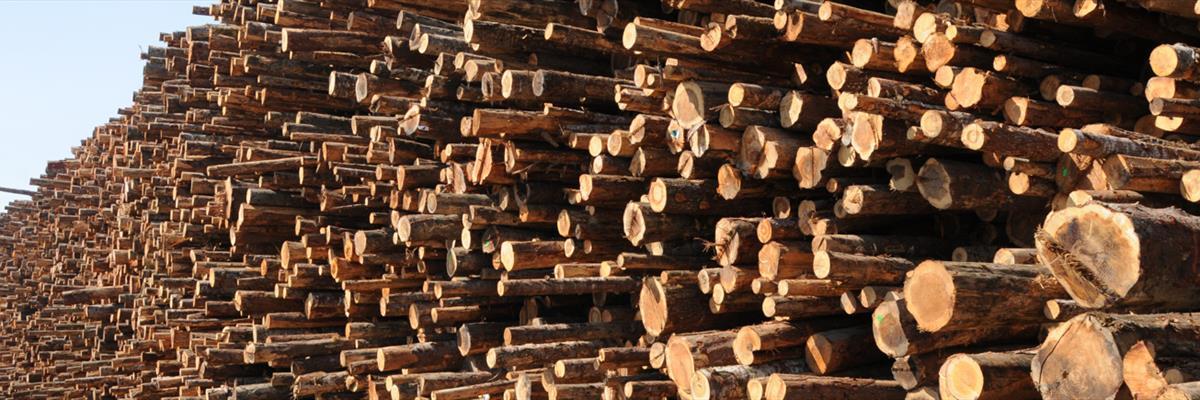 comprare legname Trieste