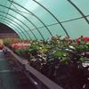 Serra per piante da fiore