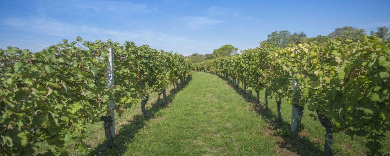 Articoli vinificazione Bolano La Spezia