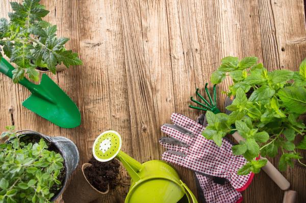 vendita piante Borore Macomer Marghine