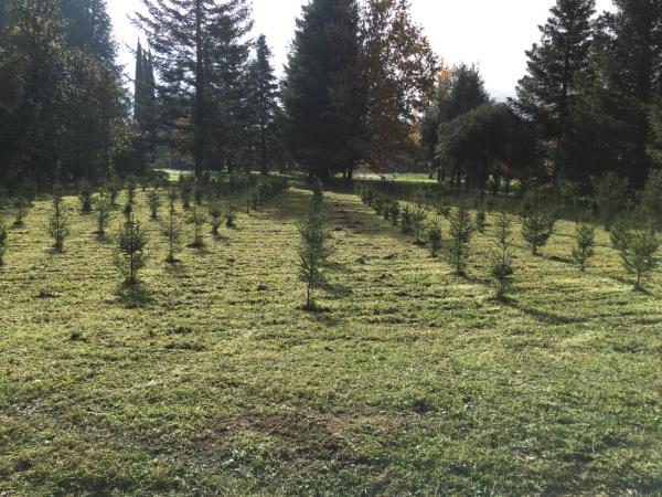 vendita conifere