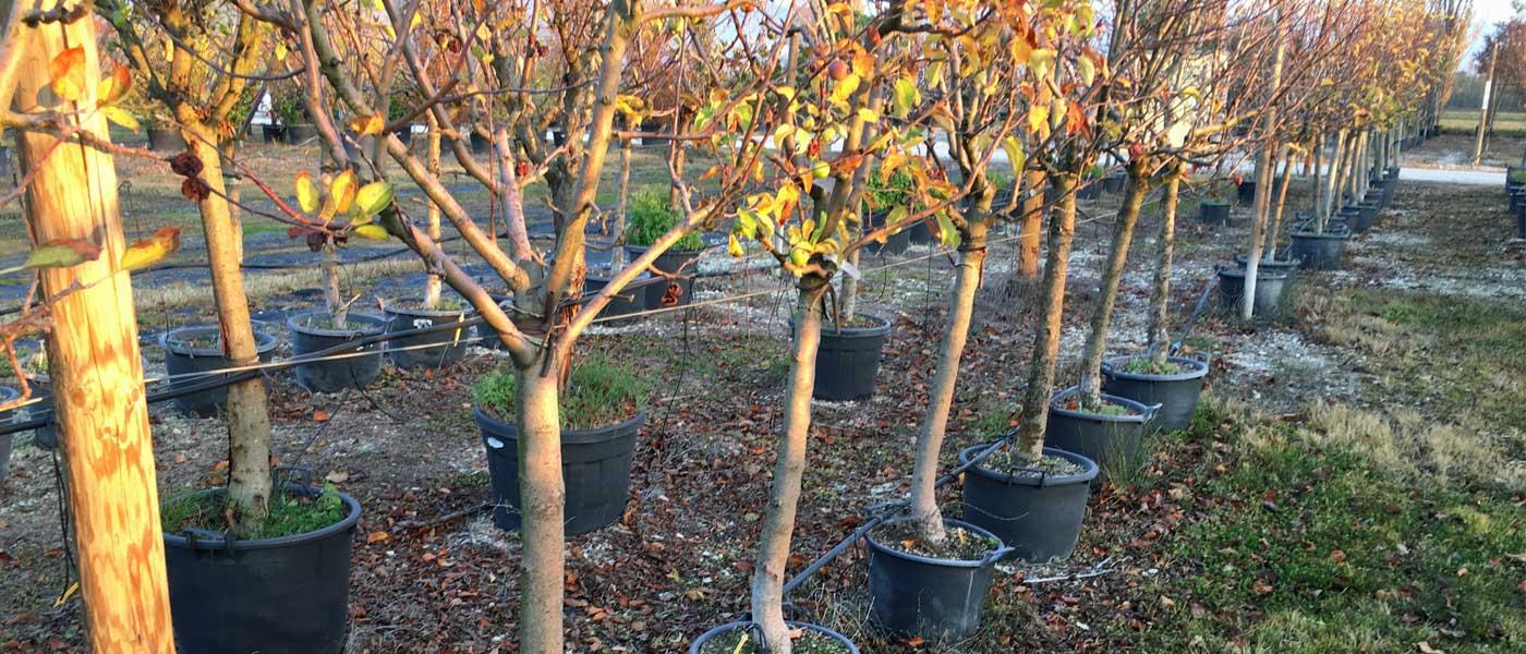 Produzione piante da frutto Rieti
