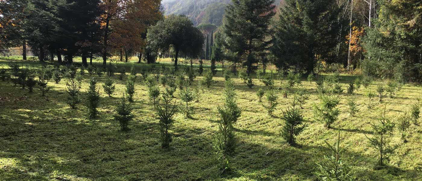 Coltivazione conifere Rieti