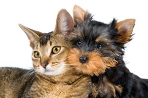 fototessere canine