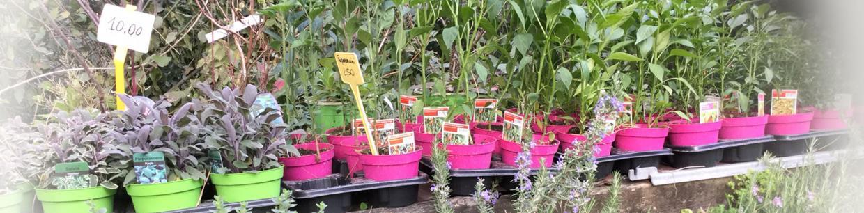 piante aromatiche vivai mari stadio olimpico roma