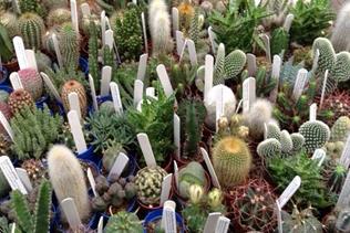 vendita piante grasse vivai mari roma nord