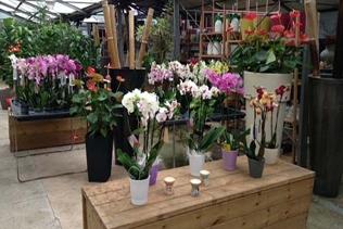orchidee vivai mari roma nord