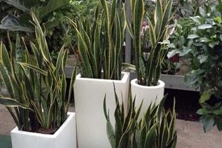vendita piante ornamentali vivai mari roma nord