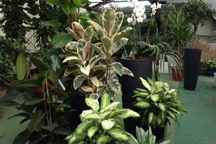 piante ornamentali vivai mari roma nord