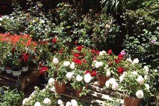 piante da giardino vivai mari roma nord
