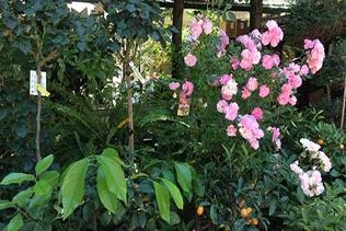 fiori per giardini vivai mari roma nord