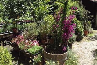 manutenzione giardini vivai mari roma nord
