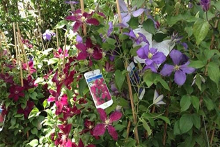 vendita fiori vivai mari roma nord