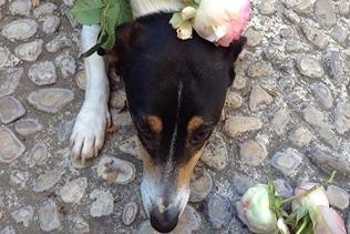il nostro cane vivai mari roma nord