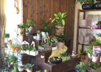 vendita noleggio piante