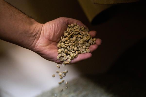 caffè arabica Lagonegro