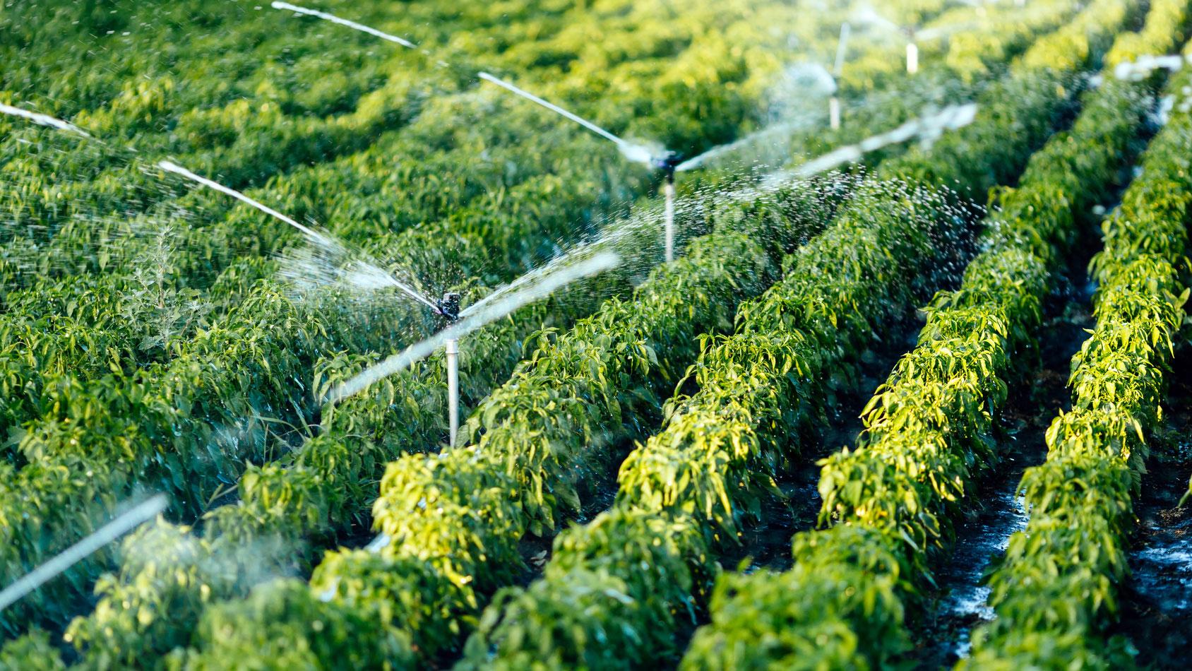 impianti di irrigazione cremona