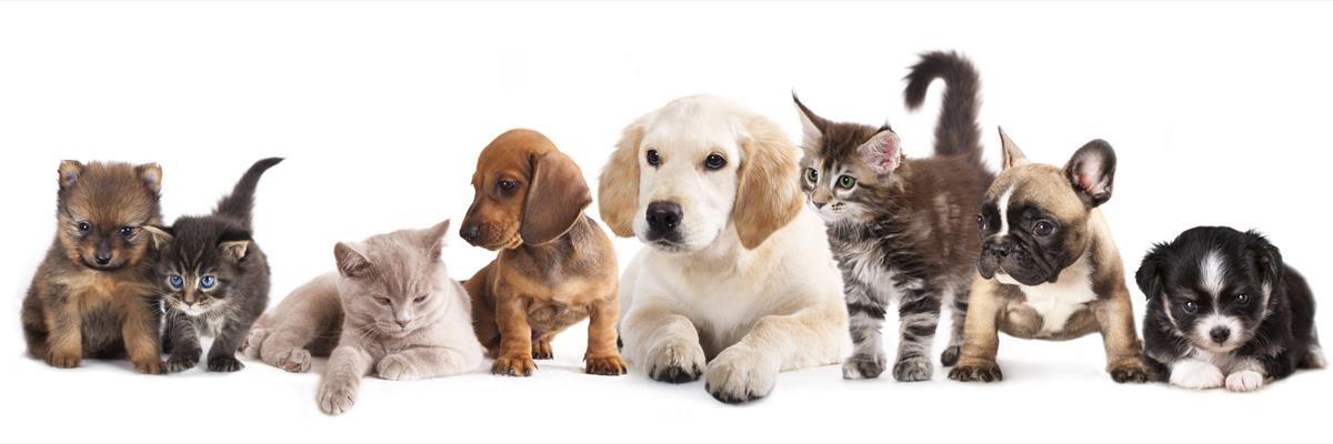 La cura del proprio animale domestico