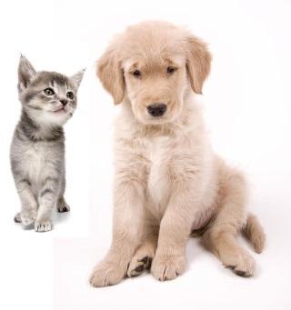 sconto veterinario cuccioli Trieste